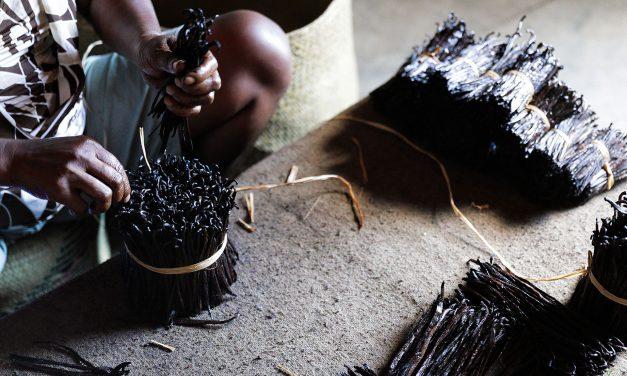 Plantation de vanille Projet Sahanala